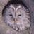 owlsperspective