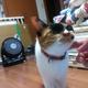 akino_shiki