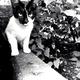 mono_cat