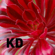 kd9951