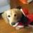 naoki_kurosawa