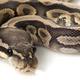 gotta_dive_into_python
