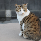 catDaisuke