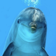 Dolphin_0809