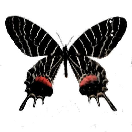 gacky01