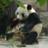 dokokano_panda
