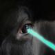 cow_eye_ray