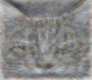 catrecog.png