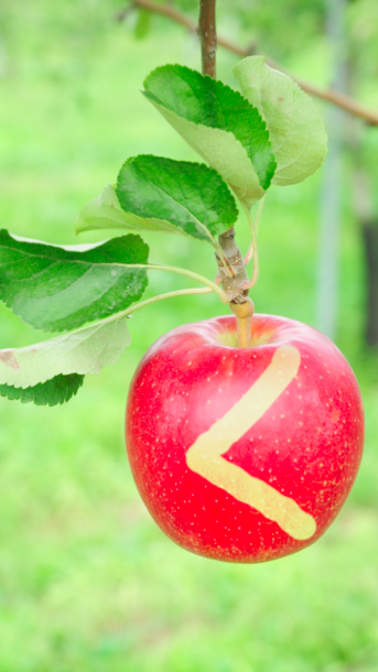 りんご_blurあり.png