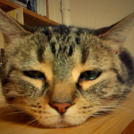 kat2n