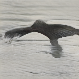 Black_Footed_Albatross_0005_796090_256_sentence5.png