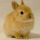 sleepy_bunny