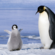 penguin1121