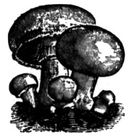 metafalse